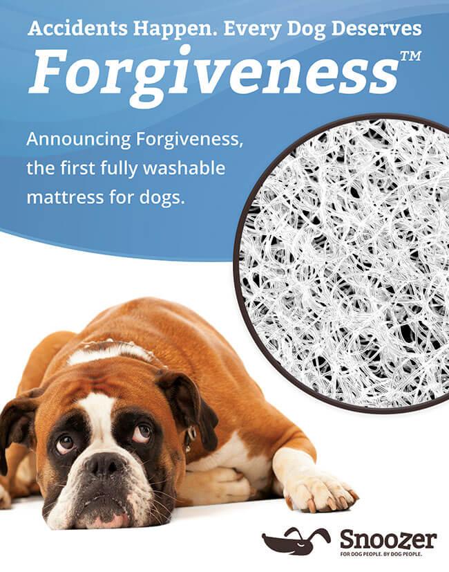 forgiveness-eblast